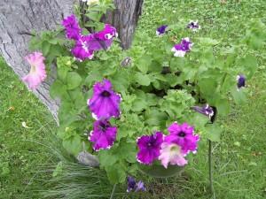 Acid Flora 09