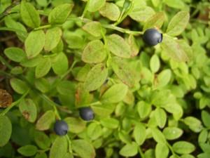 Acid Flora 03