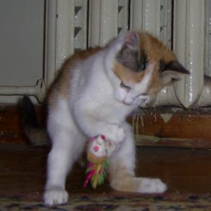 Алиса (р. 2012)