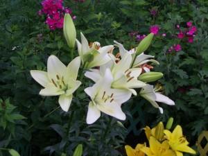 Acid Flora 11