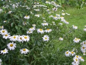 Acid Flora 05