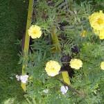 Acid Flora 14