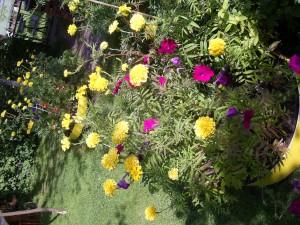 Acid Flora 13